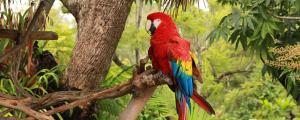 tropical-rainforest-parrot