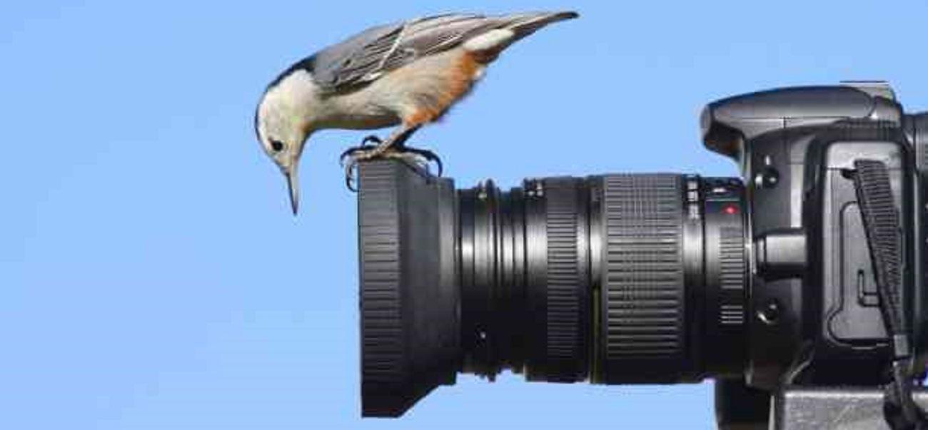 -birding