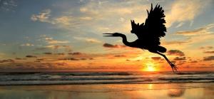 birding-hero