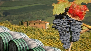Italy_Tuscany_Tour_Vineyard_i_Chianti