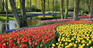 Garden-Keukenhof_Gardens