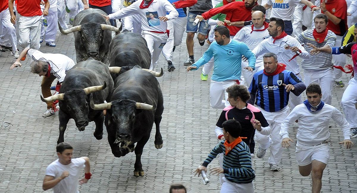 Participants run in front of Miura bulls during the last bull-run of the San Fermin Festival in Pamplona, northern Spain on July 14, 2014. The festival is a symbol of Spanish culture that attracts thousands of tourists to watch the bull runs despite heavy condemnation from animal rights groups. AFP PHOTO/ RAFA RIVAS