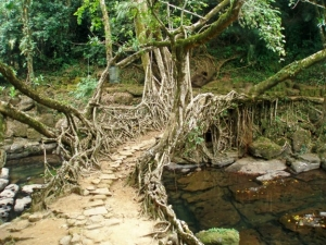 root-bridge-shillong