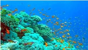water-life-maldives