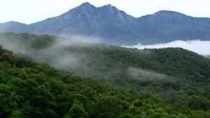 silent_valley_national_park_palakkad20131031115538_157_1